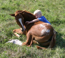 Sheldak Ranch foal